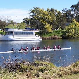 Bairnsdale Rowing Regatta by Sarah Harding - Novices Only Sports ( rowing, novices only, sport, boat, competition )