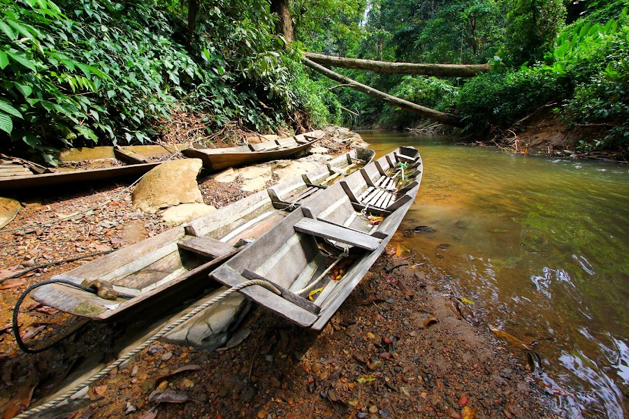 Traditional boats in the forest by Tan  Kian Yong - Transportation Boats ( stream, jungle, tropical, boats, traditional, forest, tribal )