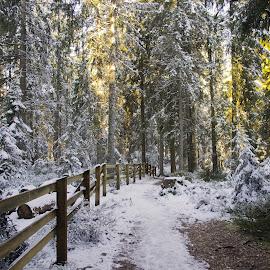 Gruere by Hraunið      Hekla - Landscapes Forests ( winter, gruere, switzerland, forest )