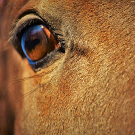 by Donna Schmidt - Animals Horses