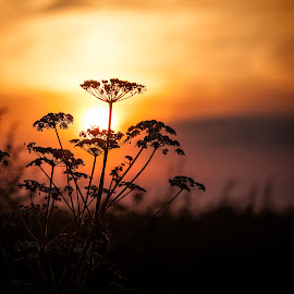 Sundown by Ian Pinn - Nature Up Close Other Natural Objects ( warm, sunset, cloud, evening, crop )