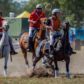 Moorooduc Polocrosse Victoria , ©BLoois2015 by Ben Loois - Sports & Fitness Other Sports