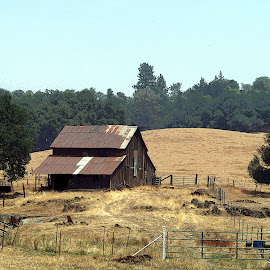 Barn in Fields by Christine B. - Buildings & Architecture Other Exteriors ( fence, barn, california, structures, fields )