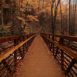 the bridge in fall by Sangram Jadhav - Buildings & Architecture Bridges & Suspended Structures ( colors, fall, bridge, walk, colours )