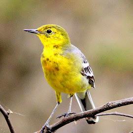 by Kuntal D - Animals Birds