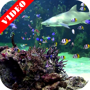 Video wallpaper aquarium android apps on google play for Racine pour aquarium