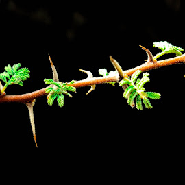Happy to see green leaves... by Sanjeev Kumar - Nature Up Close Leaves & Grasses