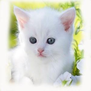 black and white female cat names