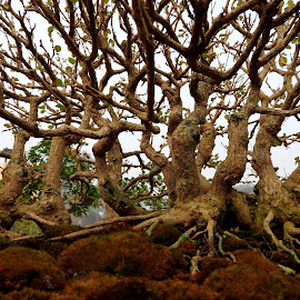 TREE ROOTS.. by Ajit Kumar Majhi - Nature Up Close Other plants