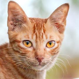 by Wahyudi Barasila - Animals - Cats Portraits
