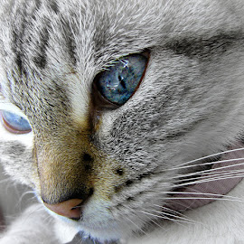 by Trish Hamme - Animals - Cats Portraits
