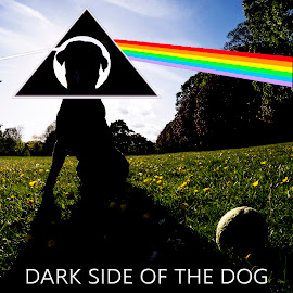 Dark Side of the Dog by Andrew Robinson - Typography Captioned Photos ( pink floyd, silhouette, puppy, dog )