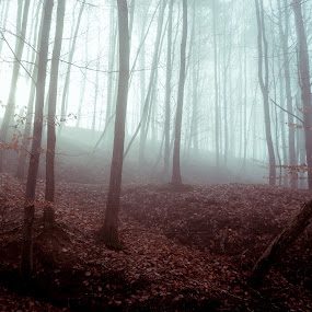 Purple-Teal Gog by Andreea Alexe - Landscapes Forests ( fallen, trees, forest, leaves, woods, branches,  )