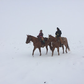 White Christmas Ride by Emily Melody - Animals Horses ( farm, winter, snow, horse, children )
