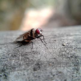 The resting Fly by Tashdique Mehtaj - Novices Only Macro ( macro, macro photography, fly, nature close up, close ups )