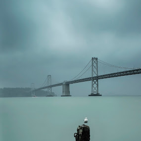 Seagull by Artem Kevorkov - Landscapes Weather ( exposure, clouds, seagull, california, weather, bridge, bay bridge, san francisco, rain )