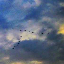 The jamb of birds on a sunset sky by Svetlana Saenkova - Nature Up Close Other Natural Objects ( birds in a sky, close up, jamb of birds,  )