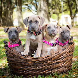 Puppies, Puppies, Puppies by Larry Welch - Animals - Dogs Puppies