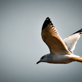 by Shashank Shekhar - Animals Birds