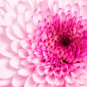 Pink by Neil Joubert - Nature Up Close Flowers - 2011-2013