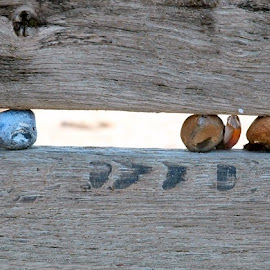 Trapped pebbles by Mark Collins - Nature Up Close Rock & Stone ( cooden, pebble, trapped, groyne, sussex, breakwater, stone, beach )