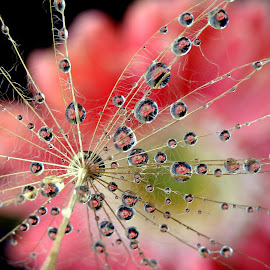 by Biljana Nikolic - Nature Up Close Other plants (  )