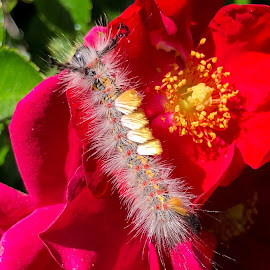 Caterpillar by Erik Bonney - Instagram & Mobile iPhone ( #flower, #iphonex, #nature, #summer, #caterpillar )
