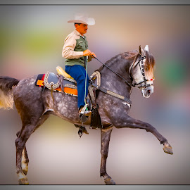Stepping Out by Gene Lybarger - Digital Art People ( parade, rider, beautiful, horse, livestock )