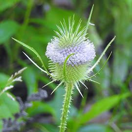 by Gerard Hildebrandt - Flowers Flowers in the Wild