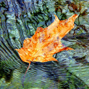 Brook Leaf Natural Reflections by Carol Milne - Landscapes Waterscapes