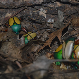 Bugs by Michele Kelley - Novices Only Wildlife ( nature, bugs, green, yellow, small )