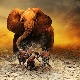 gajah-bocah.jpg