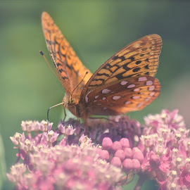 The Butterfly by D Kay Jantzi - Animals Insects & Spiders ( butterfly, summer, flower, soft )