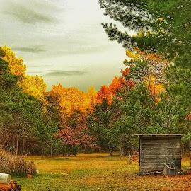 Fall 2017 Michigan  by Patti Pappas - Landscapes Forests ( michigan, orange, fall )