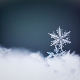 Snowflake by Aleksandr Rogozin - Nature Up Close Water ( snowflake, snow, winter, cold )