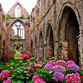 Abbey de Beauport by Ciprian Apetrei - Buildings & Architecture Decaying & Abandoned ( hortensias, building, brittany, decay, abbey,  )