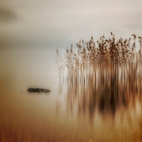 reed by Joana Kruse - Nature Up Close Leaves & Grasses