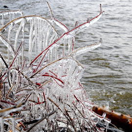 New icicles by Sandra Updyke - Nature Up Close Water ( ice, icicles, north shore, lake superior, december weather )