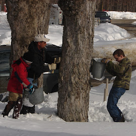 Maple syruping by Stephen Deckk - People Family