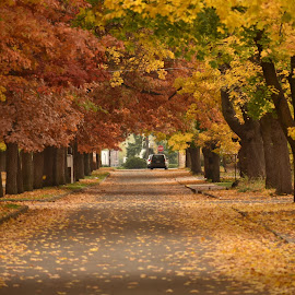 Autumn in Millwood, Wa by Terry Oviatt - City,  Street & Park  Street Scenes