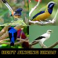 Best Singing Birds APK for Ubuntu