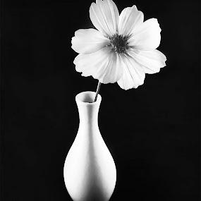 White Flower by Karin Wollina - Black & White Flowers & Plants ( vase, nature, bnw, minimalistic, flower,  )