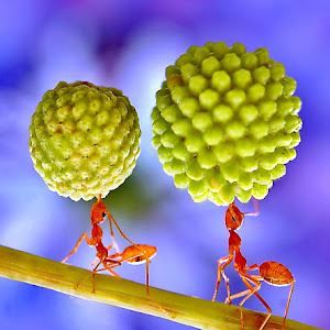 073 ant.jpg