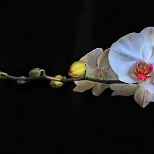 a bunga 20 PIX .jpg