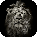 Lion King CM Locker Cool Theme APK for Bluestacks