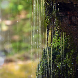 Under the Waterfall by Barbara Nuetzmann - Nature Up Close Water ( waterfall, moss, rocks )