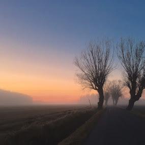 Misty road  by Alf Winnaess - Uncategorized All Uncategorized
