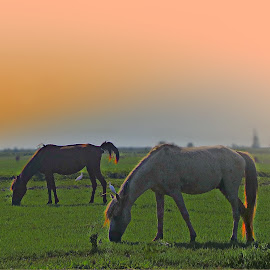 Meadow by Fereshteh Molavi - Animals Horses ( horses, grass, green, trees, sun )