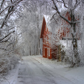 HOAR FROST by Harald Gjerholm - Landscapes Weather ( frost cold winter farm trees )
