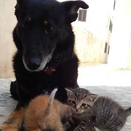 ponosna mama  by Marijan Alaniz - Animals - Cats Kittens (  )